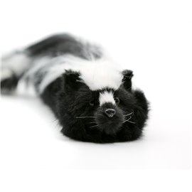Sammy The Skunk Spring Animal
